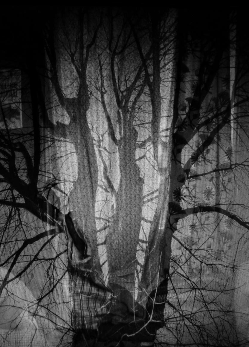 Roi aux branches